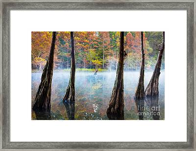 Beavers Bend Cypress Grove Framed Print by Inge Johnsson