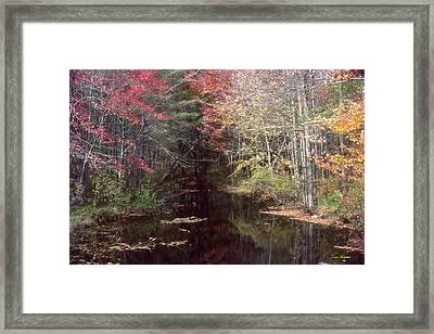 Beaver's Haunt Framed Print by Bruce Thompson