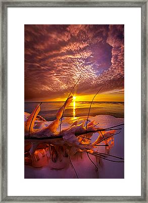 Became Entwined Framed Print by Phil Koch
