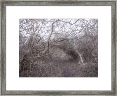Beckoning Dream  Framed Print by Roxy Riou