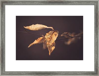 Beckoning Framed Print by Shane Holsclaw