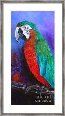 Becky The Macaw Framed Print by Jenny Lee
