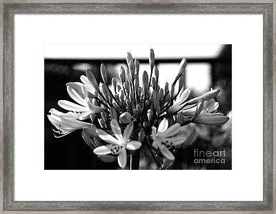 Becoming Beautiful - Bw Framed Print