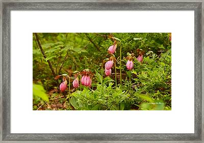 Bed Of Lady's Slippers Framed Print