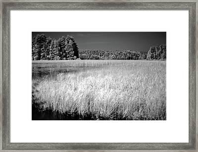 Bed Of Reeds Framed Print