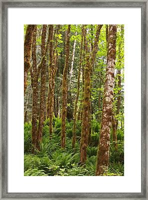 Bedal Framed Print