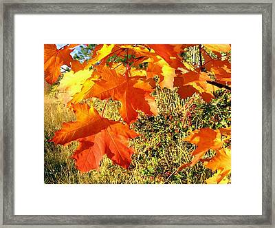 Bedazzling Framed Print by Will Borden