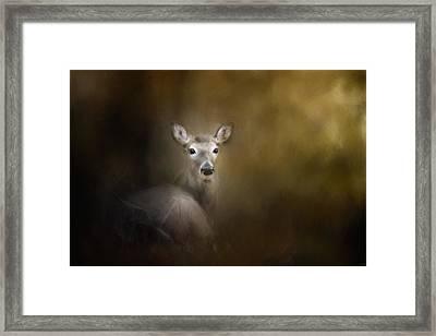 Bedded Down Deer Art Framed Print by Jai Johnson
