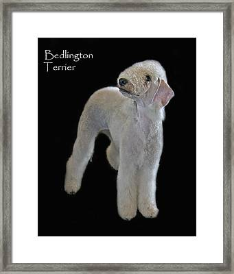 Bedlington Terrier Framed Print