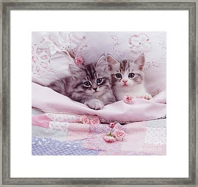 Bedtime Kitties Framed Print