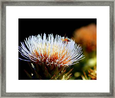 Bee And Artichoke Framed Print