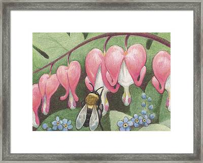 Bee And Bleeding Heart Framed Print by Amy S Turner