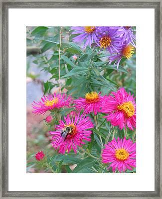 Bee And Blooms Framed Print by Pamela Turner