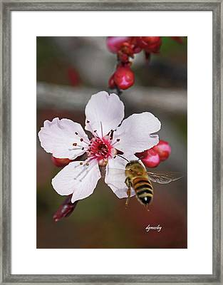 Bee And Blossom 9592 Framed Print by David Mosby