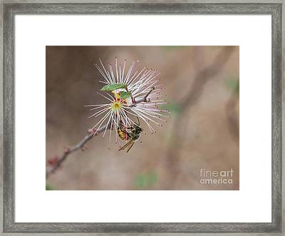 Bee And Fairy Duster Framed Print