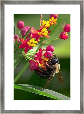 Bee And Flowers Framed Print by E Mac MacKay