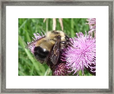 Bee Framed Print by Angela Christine