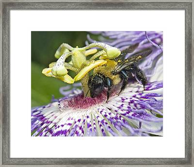 Framed Print featuring the photograph Bee At Work by Alan Raasch
