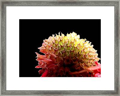 Framed Print featuring the photograph Bee Balm by Diane Merkle
