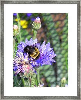 Bee Bee Framed Print by Peter Mowry