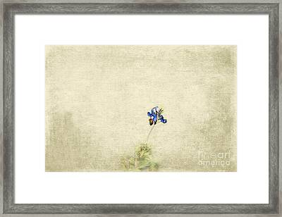 Bee Bluebonnet Framed Print