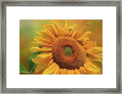 Bee Buffet Framed Print by Donna Kennedy