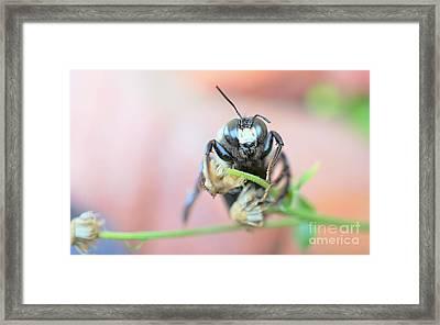 Bee Busy Framed Print