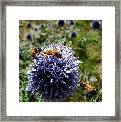 Bee Circles Framed Print