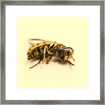 Bee Deaths Framed Print by Jorgo Photography - Wall Art Gallery