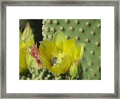 Bee-deep In Cactus Pollen Framed Print by Feva Fotos