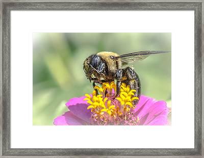 Bee Dream Framed Print