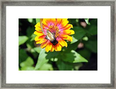 Bee Easy Framed Print by Dion Baker