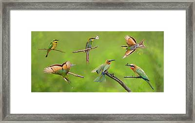 Bee-eater Collage Framed Print