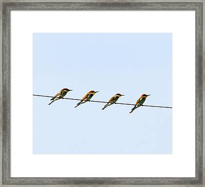 Bee Eaters On A Witre  Framed Print