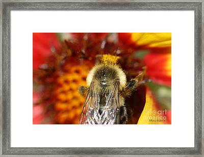 Bee Five - Framed Print by Silvana Siudut
