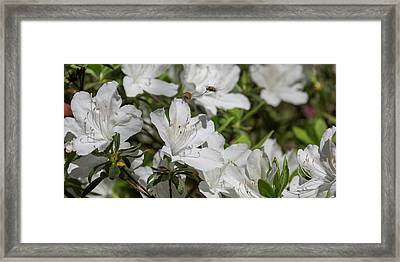 Bee Flys In Motion Framed Print