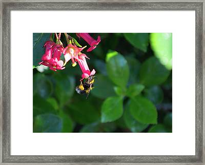 Framed Print featuring the photograph Bee Gathering Nectar by Scott Lyons