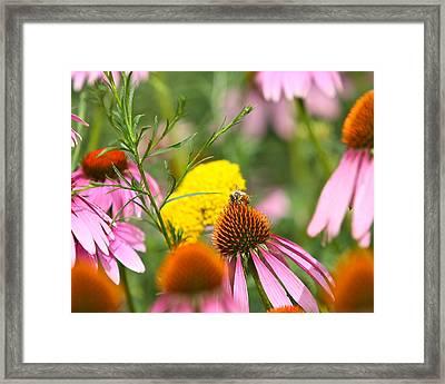Bee Gone Framed Print by Robert Joseph