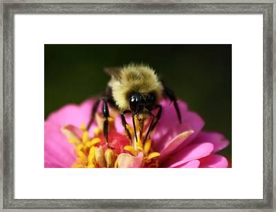 Bee Good Framed Print by Annie Babineau