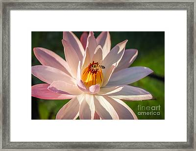 Bee Goodness Framed Print by Liesl Walsh
