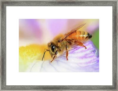 Bee Happy Framed Print by Donna Kennedy