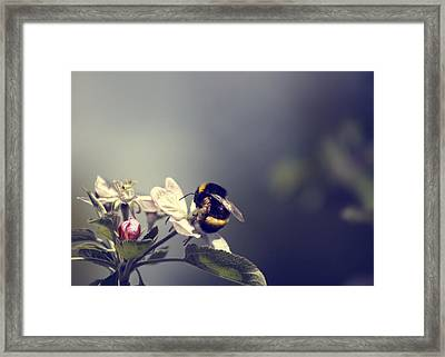Bee Happy Framed Print by Gabriel Calahorra