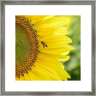 Bee Happy  Framed Print by Steve  L'Italien