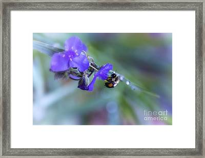 Bee Harmony Framed Print by Mary Lou Chmura