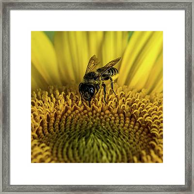 Framed Print featuring the photograph Bee In A Sunflower by Paul Freidlund