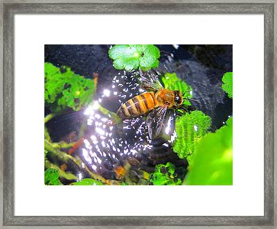 Bee In Distress Framed Print by Catherine Natalia  Roche