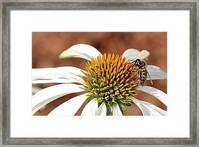 Framed Print featuring the photograph Bee In The Echinacea  by AJ Schibig