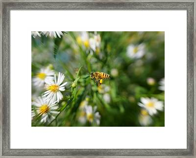 Bee In The Flight Framed Print by Lilia D