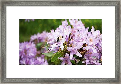 Bee In The Flowers Framed Print by LDS Dya