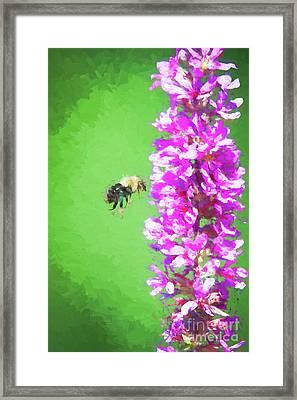 Bee Kissing A Flower Framed Print